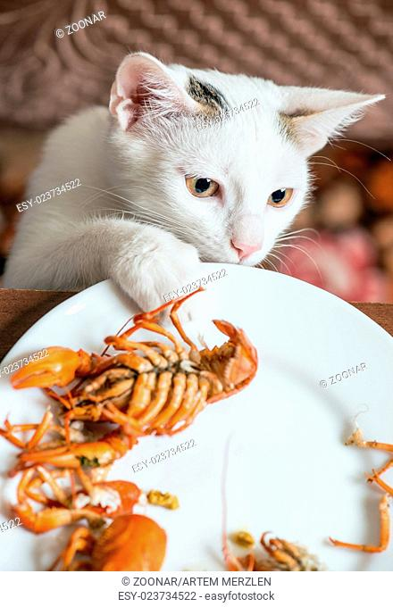 White cat steals crayfish from dish