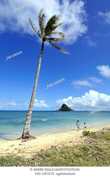 Coconut tree and beach, Chinaman's hat or Mokolii Island, Kualoa Park, Kaneohe Bay, Oahu, Hawaii, USA
