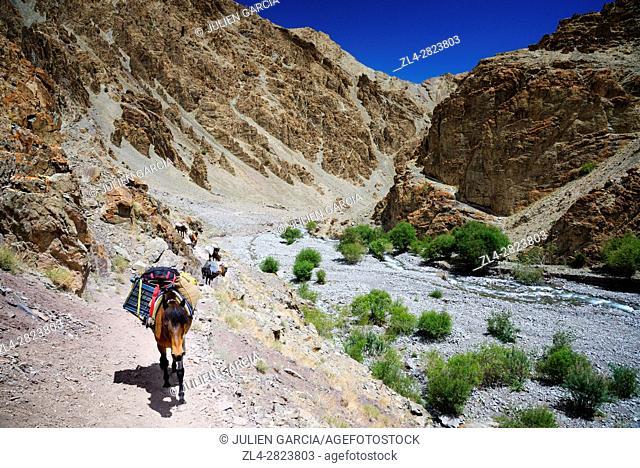 India, Jammu and Kashmir State, Himalaya, Ladakh, Hemis National Park, horses between Stok and Stok Kangri