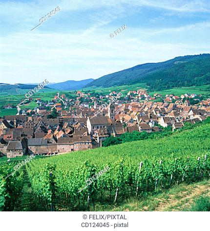 Riquewihr. Alsatian Wine Road. France