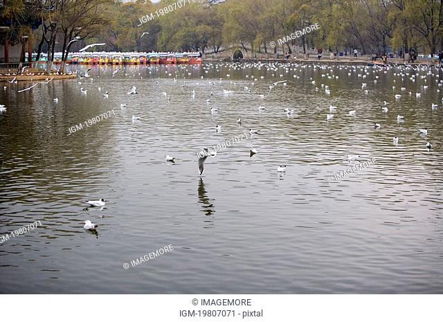 China, Yunnan Province, Kunming, Cuihu Park