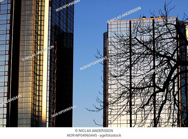 Hotel Gothia Towers both buildings with a tree infront during winter. Gothenburg Goteborg, Sweden