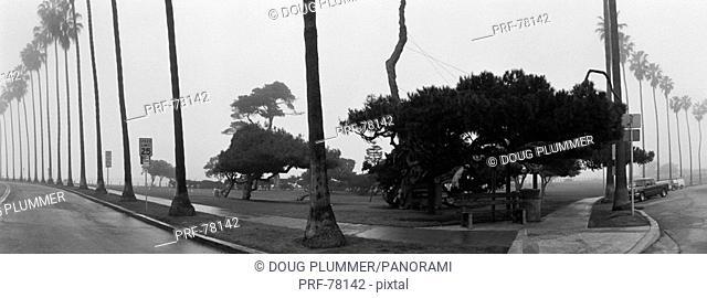 Palm Trees and Fog San Diego CA