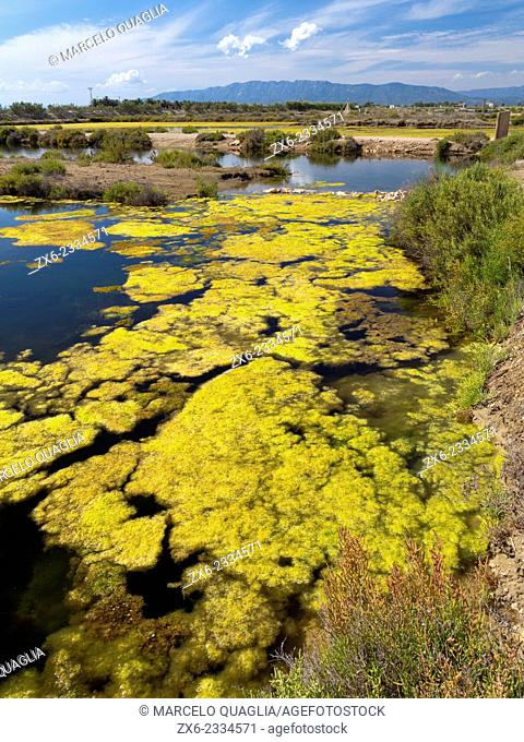 Summer algae at antique Tancada Lagoon saltworks. Ebro River Delta Natural Park, Tarragona province, Catalonia, Spain