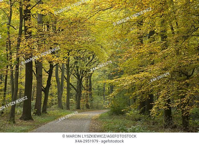 Eilenriede Park in Hanover, Lover Saxony, Germany