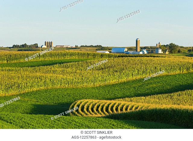 Alfalfa fields and corn fields that are terraced among dairy farms; Iowa, United States of America