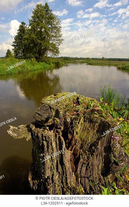 Narew river near Bialystok. Podlasie region. Poland