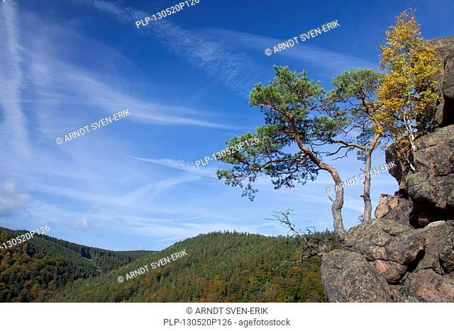 View from the Ilsestein / Ilsestone near Ilsenburg in the Ilse valley, Harz mountains, Thale, Saxony-Anhalt, Germany