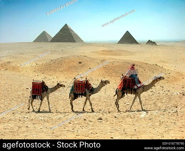 Three camel caravan going through the sand desert near pyramid in the Egypt - Ca