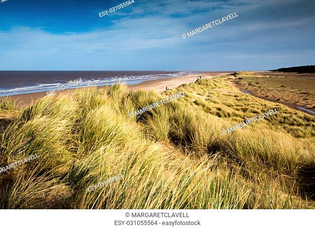 A windy day at Holkham Beach, Norfolk, UK, with long grass in the foreground and the sandy beach disappearing into the distance