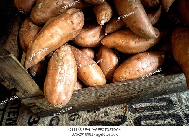 Wooden box full of sweet potatoes in organic vegetable shop. London, England
