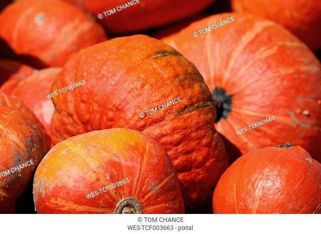 Hokkaido pumpkins (Cucurbita maxima), close-up
