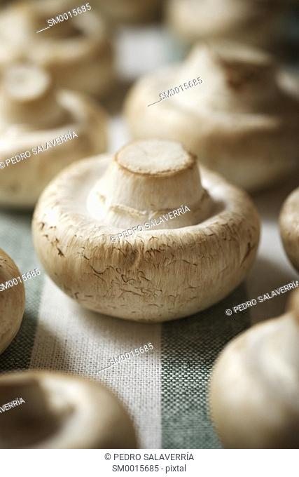 Mushrooms on a striped tablecloth