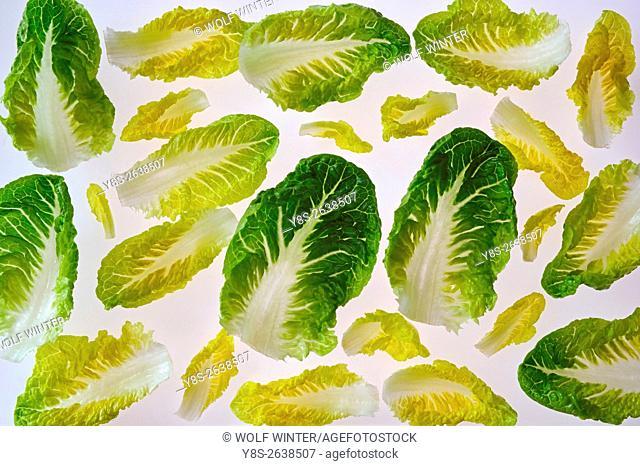 Romana Salad Leaves