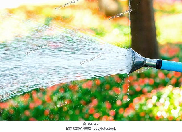 Close up worker watering flower in garden