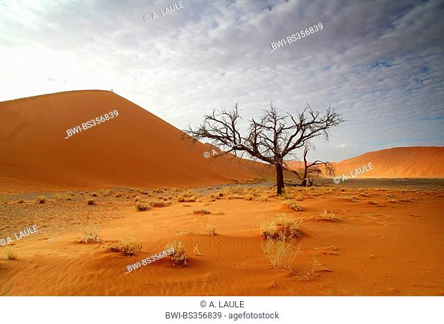 sand dunes and a dead tree, Namibia, Namib Naukluft National Park, Sossusvlei