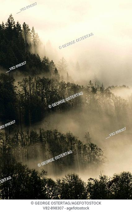 OR37715 Willamette Valley fog from Mt Pisgah summit, Howard Buford County Park, Lane County, OR