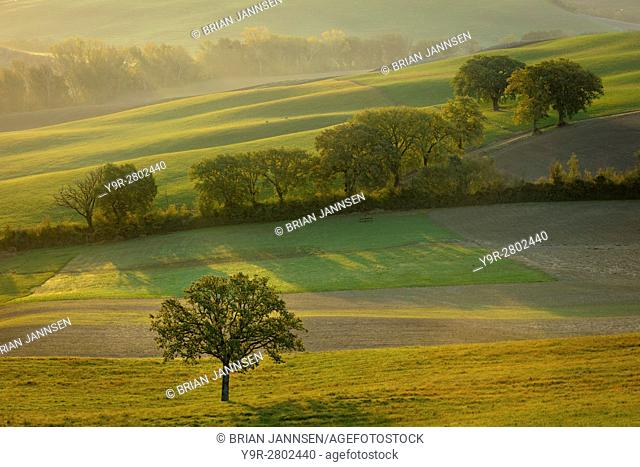 Hazy sunrise over the countryside of Val d'Orcia near San Quirico d'Orcia, Tuscany, Italy