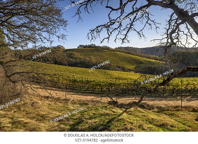 Napa Valley Vineyards in Fall, Napa California USA