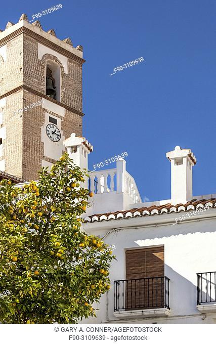 Orange tree with fruit in front Nuestra Senora del Rosario church in Salobreña, Granada, Spain