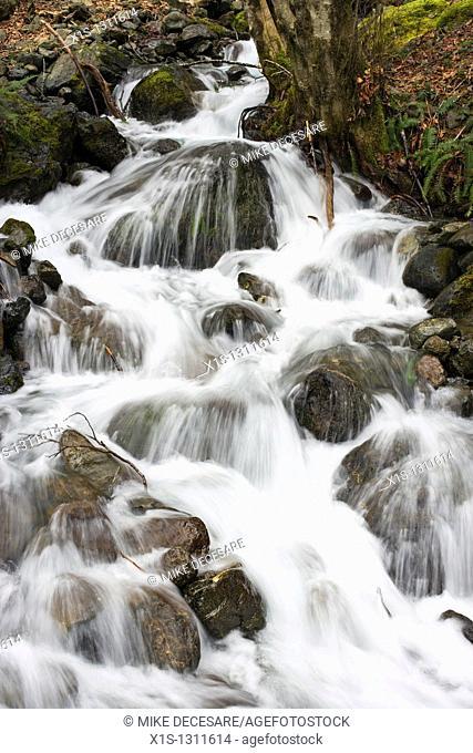 Waterfall on the Olympic Peninsula