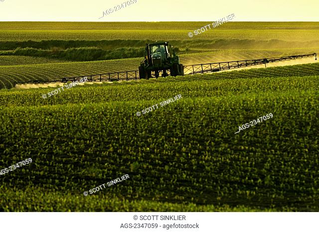 Agriculture - Post-emergent herbicide being applied to an early growth grain corn field by a John Deere sprayer in late afternoon light / Iowa, USA