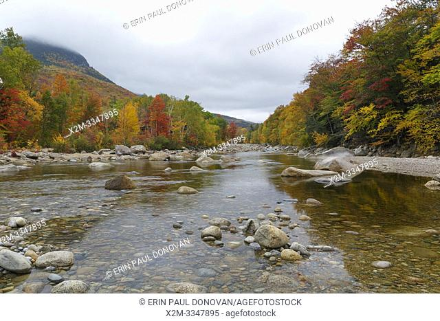 Autumn foliage along the East Branch of the Pemigewasset River in Lincoln, New Hampshire on a cloudy autumn day. This location is near where Clear Brook drains...