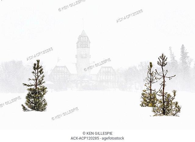 Pine trees in a snowstorm, Assiniboine Park Pavilion in the background, Assiniboine Park, Winnipeg, Manitoba, Canada