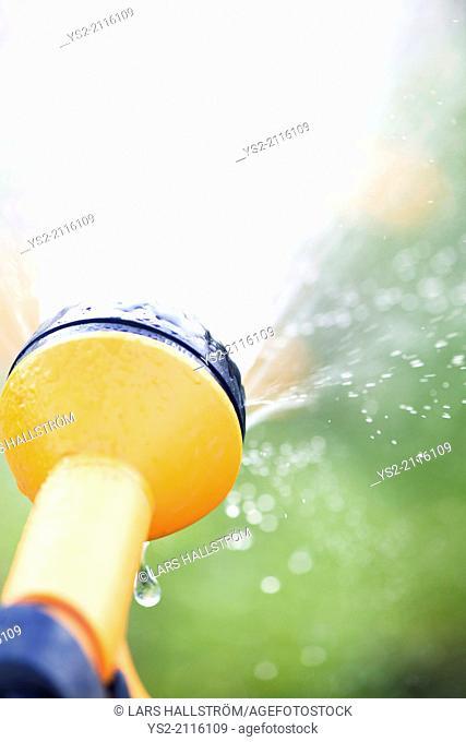 Watering garden plants with yellow sprinkler