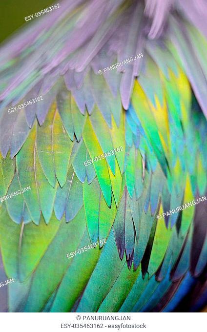 Closeup shot of a Nicobar Pigeon feathers