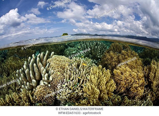 Diverse Corals on Reef Top, Raja Ampat, West Papua, Indonesia