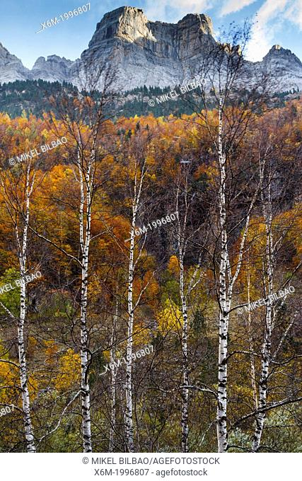 Mountains view and deciduous forest in autumn