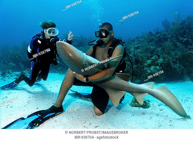 Scuba diver watching her diving instructor stroking the belly of a Nurse Shark (Ginglymostoma cirratum) in way that causes the shark to fall into a state of...