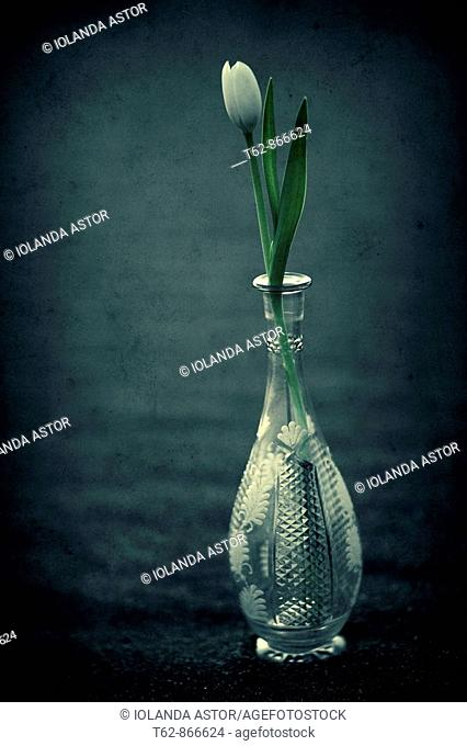 A vase of tulips in a glass of Bohemia  Liliaceae