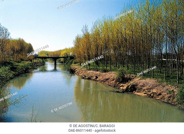 Poplar grove along the Agogna torrent, in the vicinity of Ceretto Lomellina, Lombardy, Italy