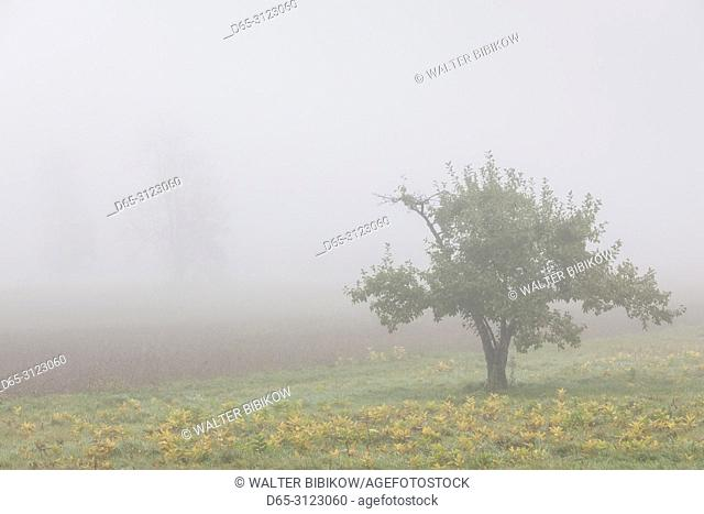 Canada, Quebec, Mauricie Region, Sainte-Anne-de-la-Perade, trees in fog, autumn