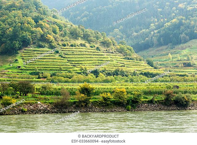 Pattern of rows of grape vines in vineyard in the Wachau Valley on the banks of River Danube in Austria