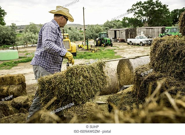 Mature man on farm wearing cowboy hat moving bales of hay