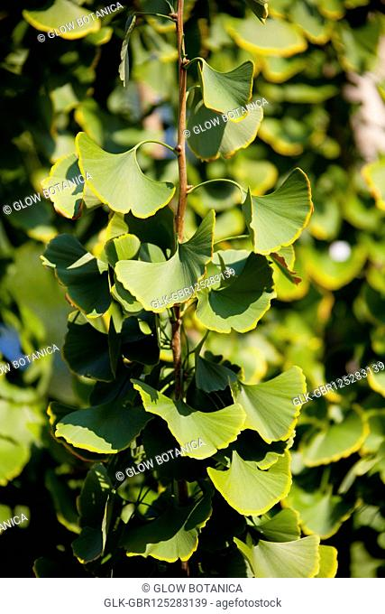 Close-up of vines