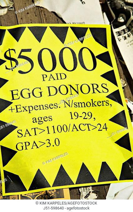 TEXAS  Austin   Sign posted on University of Texas campus, money offered to egg donors with qualifications