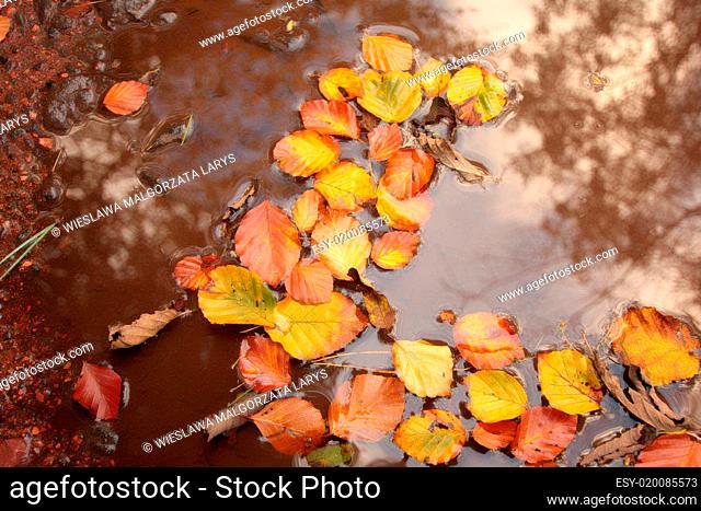 Beautiful autumn in Scotland