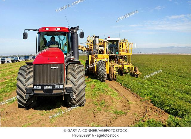 Mechanized harvesting and field of carrots, California