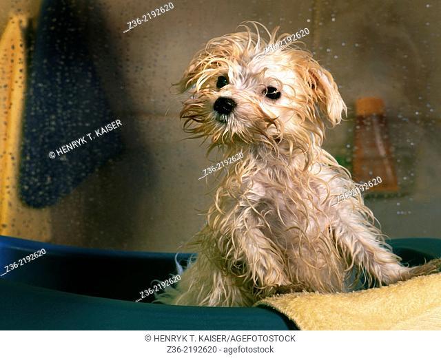 Wet dog in bathroom