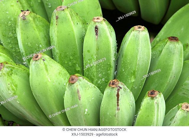 Green Banana, Banane, borneo