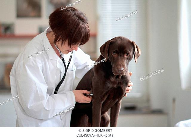 Female veterinarian listening to dogs chest through stethoscope