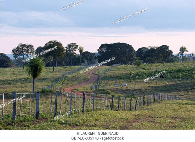 Rural highway, Pantanal, Mato Grosso do Sul, Brazil