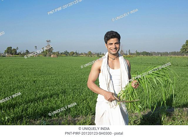 Farmer harvesting crop with a sickle, Sonipat, Haryana, India