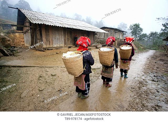 Vietnamese woman, red dao, Sapa, Hanoi, North Vietnam, Southeast Asia