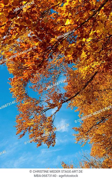 Autumn forest, trees in autumn