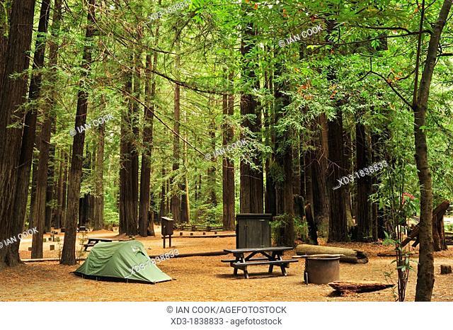 Burlington Campground, Avenue of the Giants, California, USA